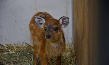 Video e foto del tenerissimo cucciolo arrivato a Le Cornelle. Il nome lo scegliete voi!