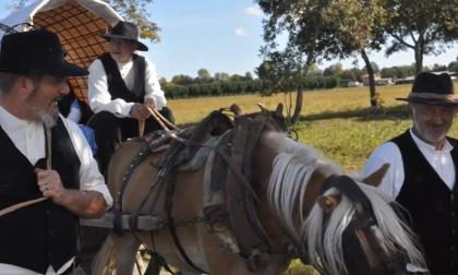 I cowboy della Bergamasca cavalcano online: in un video la Transumanza dei Bergamini