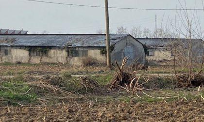 """Tagliati gli alberi a Cascina Spina, l'ultimo """"polmone verde"""" di Urgnano: è polemica"""