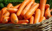 In regalo con il Prima Bergamo in edicola, questa settimana, i semi di carota