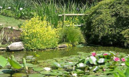 Per tutto maggio si riaprono le porte dell'Orto Botanico in Città Alta e ad Astino