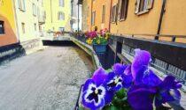 La ciclabile di Alzano ricoperta di fiori grazie ai cittadini (e a Facebook)