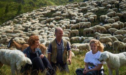 Torna Pasturs, il progetto per scoprire gli alpeggi e tutelare la biodiversità alpina