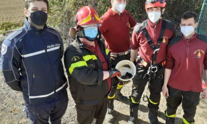 Tre pulcini di germano reale intrappolati in un pozzo a Caravaggio: le foto del salvataggio
