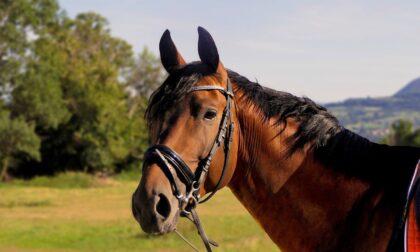 Arzago, una 44enne milanese è stata disarcionata da cavallo e travolta dall'animale