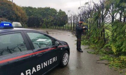 Sedicenne scappa da casa e incendia 50 alberi: danni per 7mila euro, denunciato