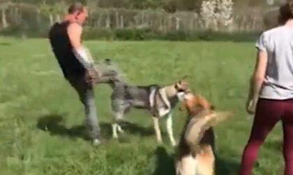 Istruttore cinofilo tira un calcio a un cane: il video che negli ultimi giorni ha sollevato un mare di polemiche