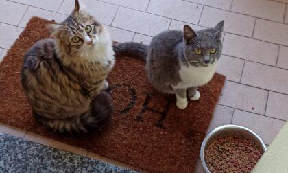 Gatti svaniti nel nulla e polpette avvelenate: cosa sta succedendo alla Roncola di Treviolo?