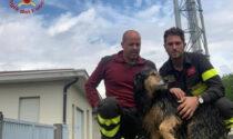 Rischia di annegare nel canale della centrale idroelettrica di Marne: cane cerca una famiglia