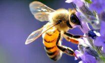 Bergamo si candida per entrare nel network europeo delle città amiche della api