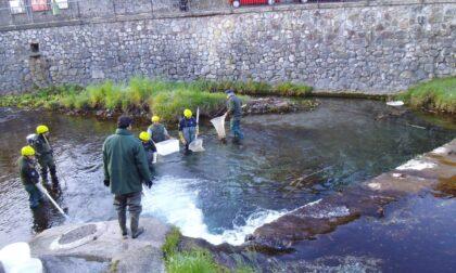Un accordo teso a tutelare la fauna ittica (anche) dei fiumi Serio e Brembo