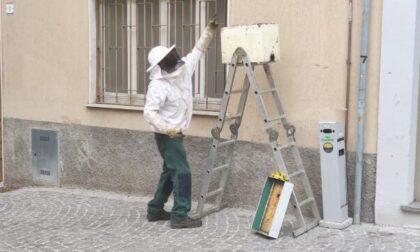 Centro di Treviglio invaso da uno sciame di api: l'intervento di un apicoltore