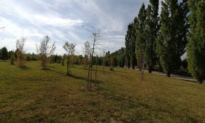 Il Bosco della Memoria sta bene, dice il Comune. Le piante stanno solo «riposando»