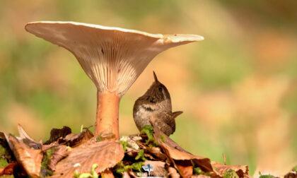 Mario Poddighe, l'uomo che, con uno scatto, rapisce la meraviglia della natura