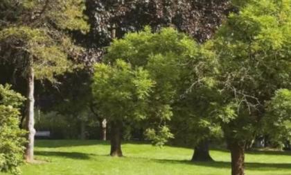 Parco della Clementina, donna cade da un albero e finisce in ospedale