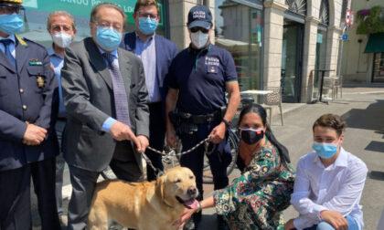 Il cane antidroga Trevi, che in realtà si chiama Heiden, va in pensione: al suo posto Athena