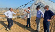 Nubifragio dell'8 luglio: nella Bergamasca 10 milioni di euro di danni all'agricoltura