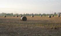 Discussione sull'irrigazione di un campo degenera e parte un colpo di pistola