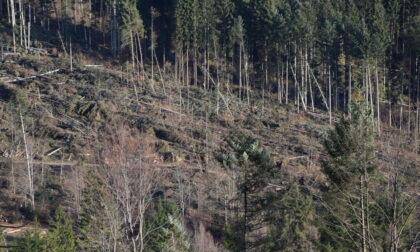 Tempesta Vaia: dalla Regione un altro milione di euro per contenere il rischio idrogeologico