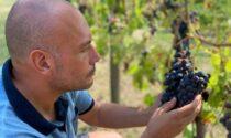 Quando la passione diventa vino: in Val Gandino (e sul web) c'è Grappolo Vivo