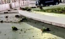 Aiuole della stazione vandalizzate: denunciato un cittadino somalo ubriaco