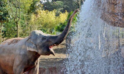 Alle Cornelle torna Educazoo: giornate a stretto contatto con gli animali in via d'estinzione