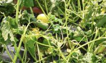 Ancora grandine e nubifragi nella Bergamasca: danni su mais, ortaggi e frutta