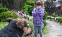 Spara e uccide cane senza museruola che stava per aggredire la figlia