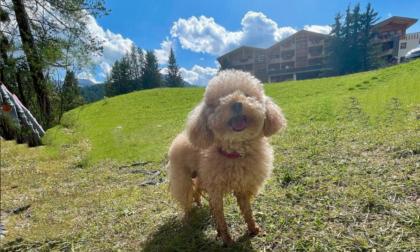 Michelle Hunziker e Tomaso Trussardi in montagna coi cani: appello anti-abbandono