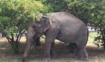 Il circo ai vigili del fuoco: «L'elefantessa ha una colica renale, aiutateci a sollevarla»