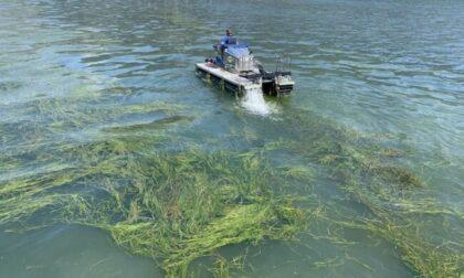Il Basso Sebino di nuovo invaso dalle alghe, l'Alto Sebino soffocato da tronchi e detriti