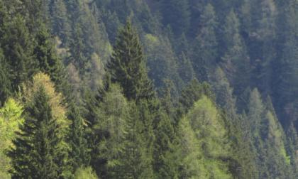 Quasi metà della Bergamasca è ricoperta di boschi. E non è per forza una buona notizia