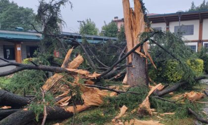 Fulmine si abbatte nel parco di Orio al Serio, esplode un pino: «Miracolosamente nessun ferito»