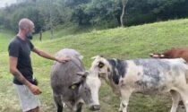 Giovanni Merla, il giovane che salva gli animali dal macello (e ora cerca una nuova fattoria)
