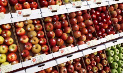 In Val Brembana è il tempo delle mele. Niente sagra, si va in tour: via da Moio de' Calvi
