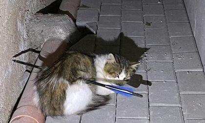 Gira per le strade di Dorga e spara frecce ai gatti: micio morto dopo un giorno d'agonia