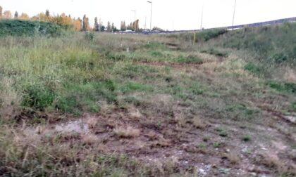 Cosa resta del «bosco in città»? Un dozzina di alberelli e delle erbacce, dicono le foto