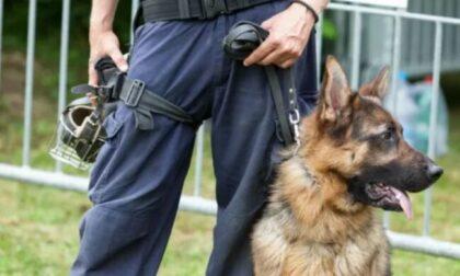 A Dalmine arriva Jessie, il primo cane antidroga della Polizia locale